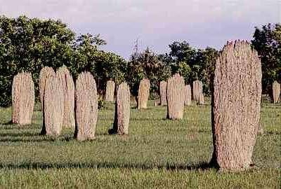 Magnetic termite mounds, Northern Territory, Australia. They all face the same direction for optimal cooling.