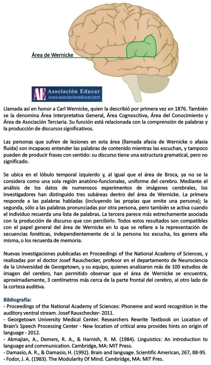 Área de Wernicke- Asociación Educar - Ciencias y Neurociencias aplicadas al Desarrollo Humano - www.asociacioneducar.com
