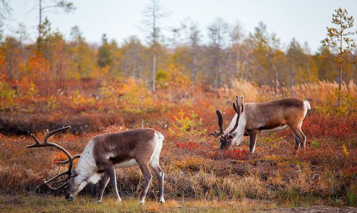 25+ Best Ideas About Deer Wallpaper On Pinterest