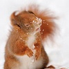 squirrel hit by snowball   I mean come on how CUTE!!