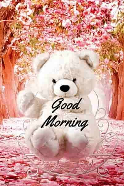 Good Morning Teddy Bear Wallpaper Good Morning Wishes Cute Good