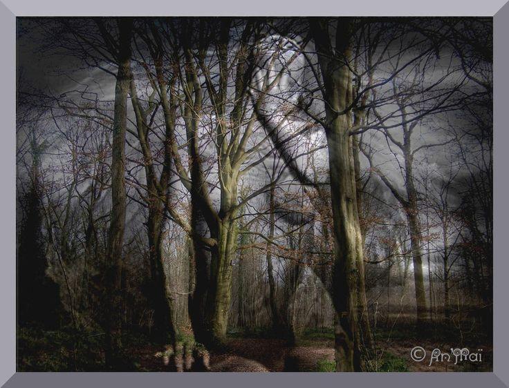 """En vrac, quelques poèmes pour illustrer le Défi d'Evy n° 49 sur le Thème : """" l'arbre """" Les arbres J'aime les grands arbres Les grands arbres touffus Qui m'offrent l'ombre douce De leurs feuillages drus, Où chantent par milliers Les oiseaux printaniers...."""