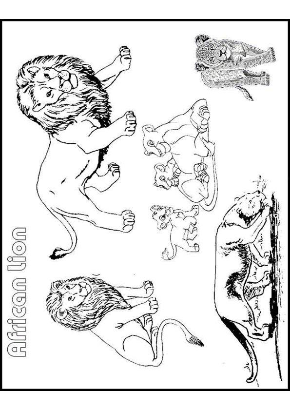 Coloriage des différents lions d'Afrique