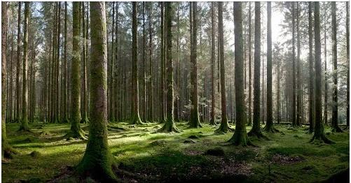 Trees by Anthony David Hall