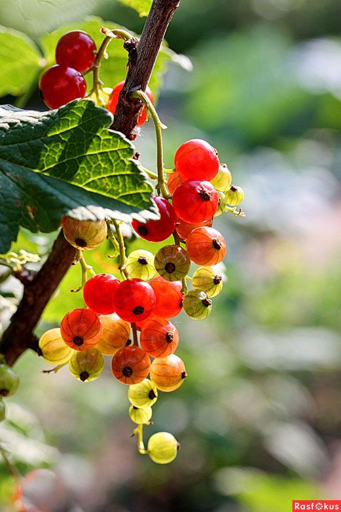 Пин на доске Фрукты, ягоды и овощи
