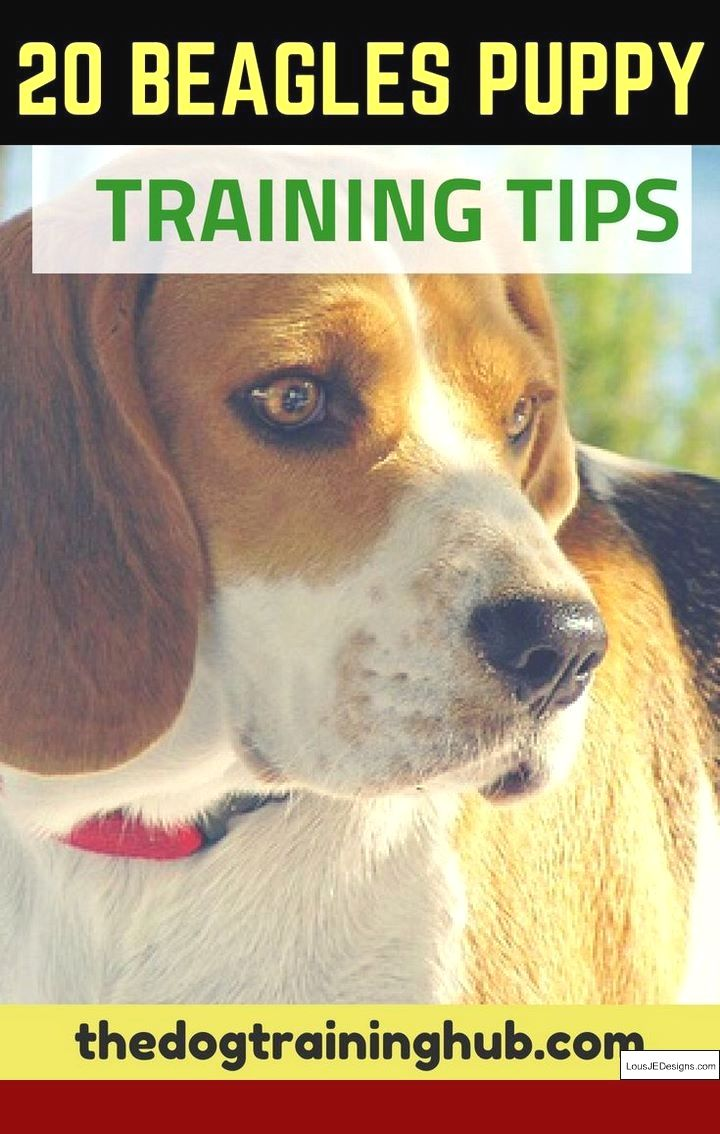 Best Way To Train A Squirrel Dog Puppy And Pics Of Dog Agility