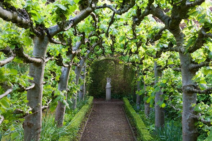 Espallier arbor. Pinned to Garden Design by Darin Bradbury.