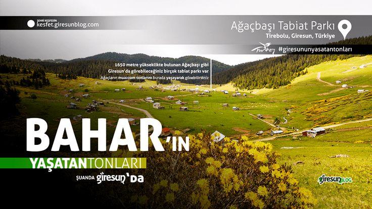 Ağaçbaşı Yaylası Tabiat Parkı http://kesfet.giresunblog.com/agacbasi-tabiat-parki/
