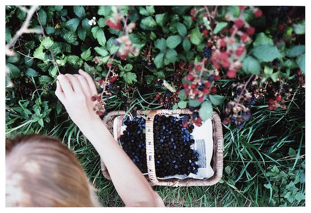 oh, sweet summer berry-picking days!