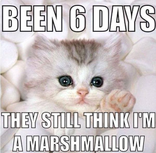 52 Best Funny Puppy And Kitten Quotes Images On Pinterest