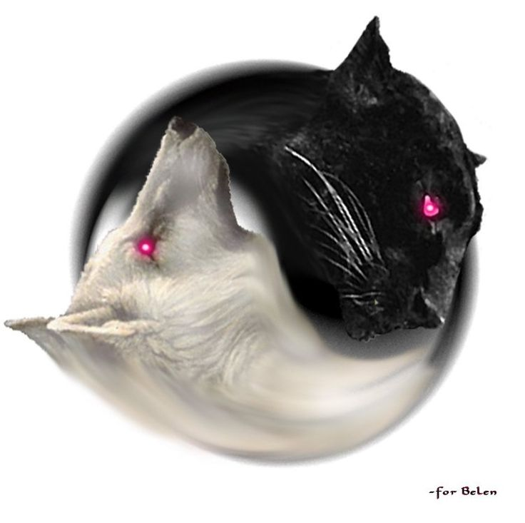 black panther and white wolf yin and yang :-) :-)