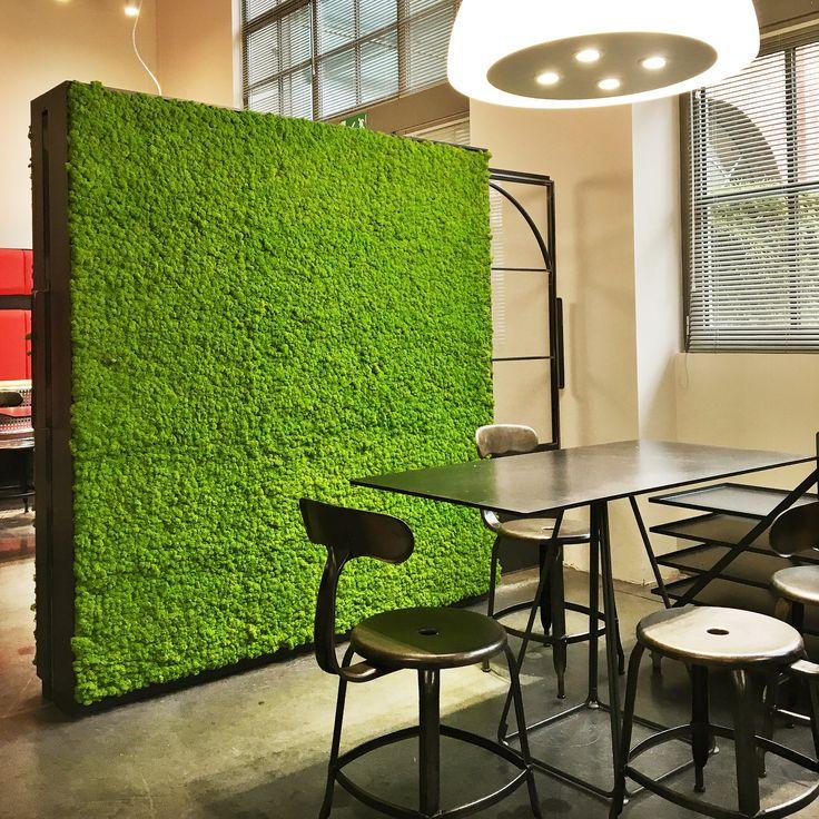 Oltre 25 fantastiche idee su muschio parete su pinterest for Verde stabilizzato