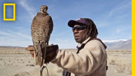 Hunting With Falcons: How One City Man Found His Calling in the Wild | Short Film Showcase #news #alternativenews