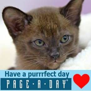 Official website for Page-A-Day Calendars and Gifts from Workman  Publishing, creators of America's bestselling calendar line since 1977