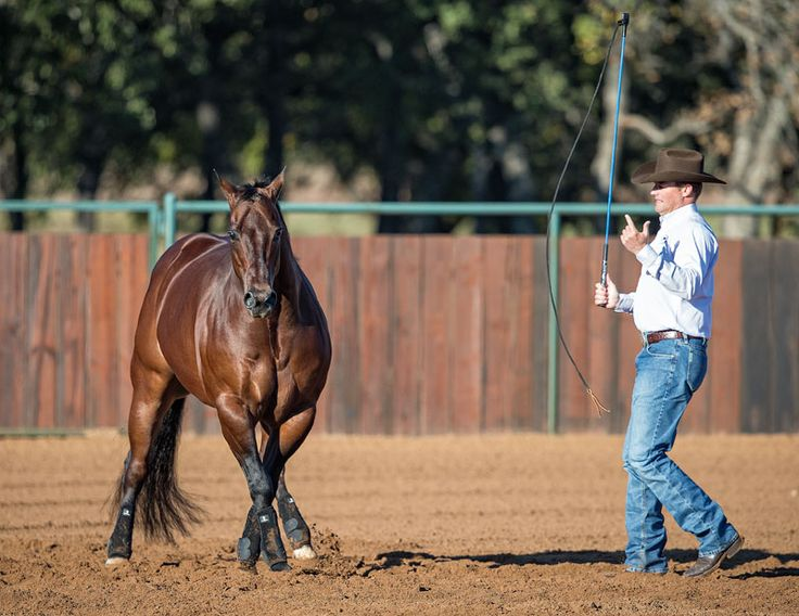 Teaching a horse how to side pass towards you with Clinton Anderson
