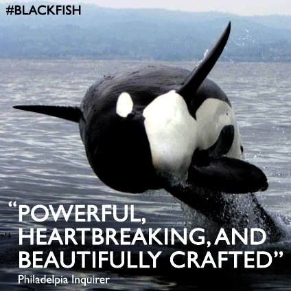 10 best images about Boycott Sea World on Pinterest | Parks, Other ...