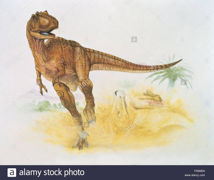 Albertosaurus Cretaceous A Collection Of Ideas To Try
