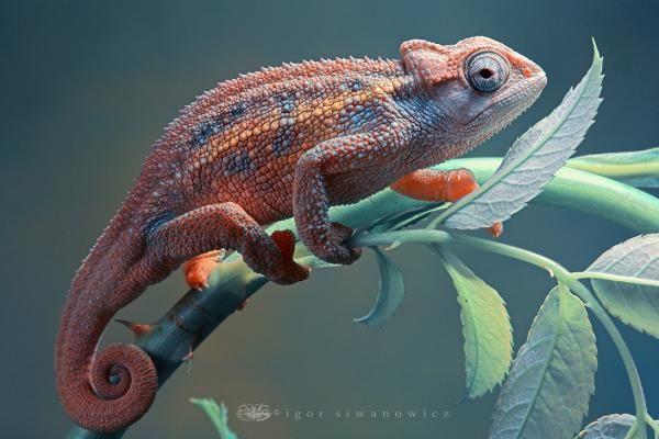 Amazing macro photographs of animals by US based photographer Blepharopsis.