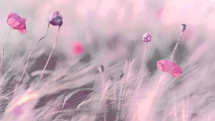 3 HOURS Best Relaxing Music | Romantic Piano | - Background - Spa - Musi...