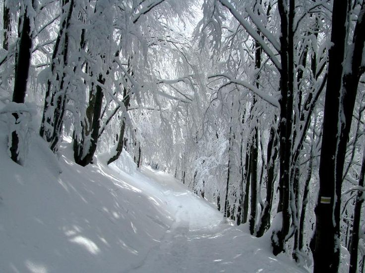 They were so beautiful in winter...
