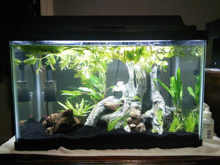how to feed betta fish on buttom of the tank