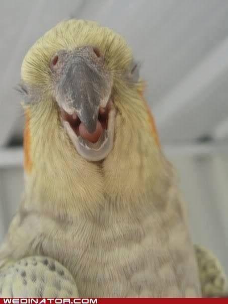 Happy Cockatiel-methinks had a cocktail at happy hour.