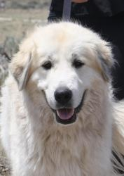 Can I adopt you? :(Adoption, Dogs