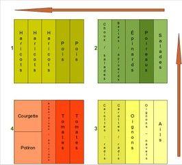 Rotation des cultures au potager - modèle simplifié