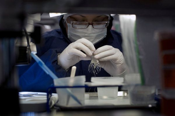 Unbelievable: Heart Stents Fail to Ease Chest Pain