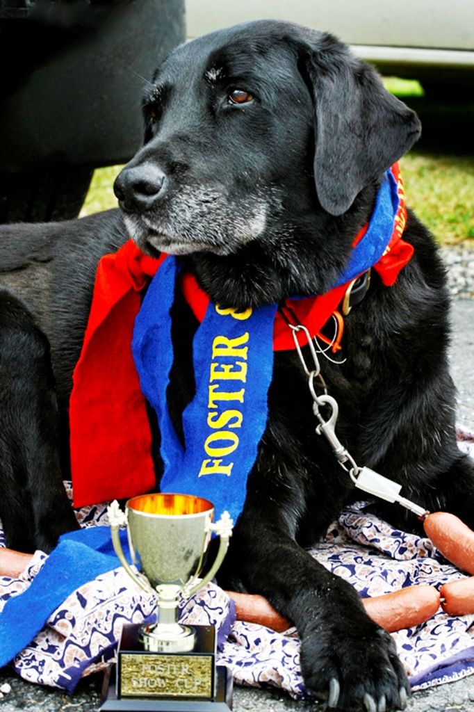 Today we have a tale about a dog, Sultan. True to his labrador breed, he won the Champion Chewer event at the Foster show in Gippsland for about 10 years straight. Even being handicapped with twice as much food as any other dog didn't stop him. His owners, the Goldie family, had so much fun they started entering other things too, including cookery. Eva Goldie shares her rocky road recipe in the cookbook.