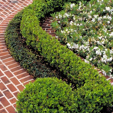"by McDugald-Steele Landscape Architects ""Asian Jasmine Groundcover, Baby Gem Boxwood, Mrs. G.G. Gerbing Azalea(white)"" ""Manicured boxwoods against white plantings and brick hardscapes"" ""Mix of boxwood and yaupon holly"" ""boxwoods acting as ""fence"" with plants behind....I'd want hydrangea's"" ""Mini boxwood, white petunia..."" ""boxwood and groundcover"" ""round then rect boxwood"" ""layered boxwood and groundcover"" ""baby boxwood...ivy, boxwood layer...Boxwood hedge...boxwoods & brick...boxwood…"