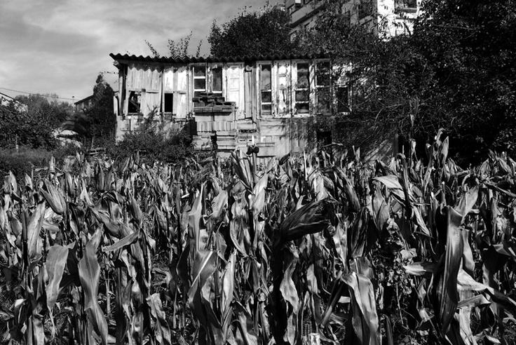 Campo de millo: Soledad Felloza, Fotografía Gastronómica, Felloza Fotografía