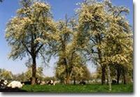 Mooi perenbomen!
