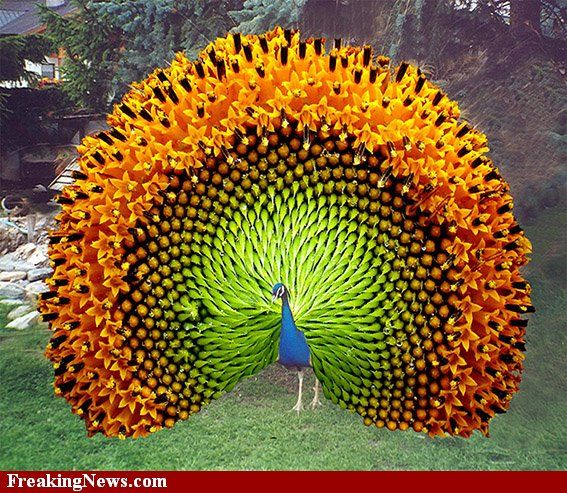 Blue and Orange...good job Mr. Peacock you created one of my favorite color combos
