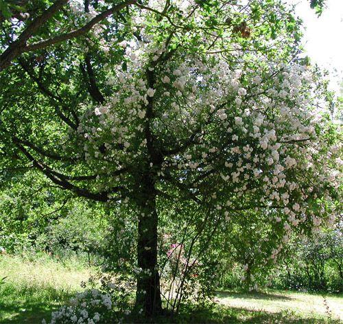 I Giardini del Casoncello (BO)