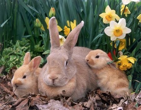 iepurasi si flori Peisaje cu animale