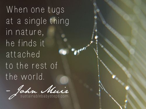 When one tugs at a single thing in nature, he finds it attached to the rest of the world. - John Muir (Find more green quotes on SustainableBabySteps.com)