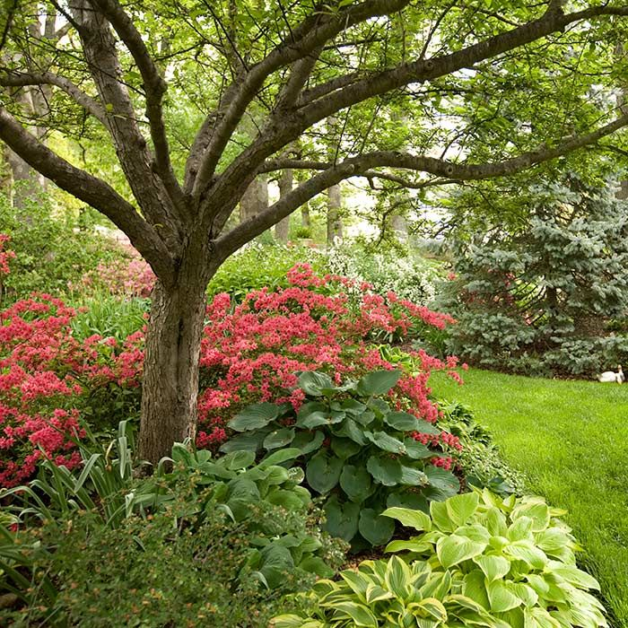 Best Azaleas Landscaping Ideas Only On Pinterest Weeds