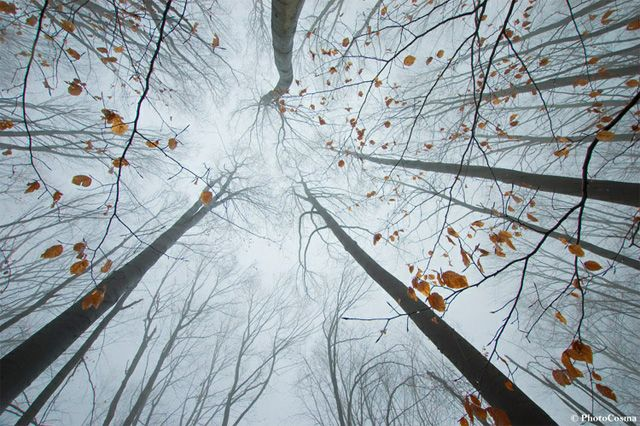 The Surreal Forests of Romania: Photos, Nature, Trees, Surreal Forests, Perspective, Romania, Leaves, Photography