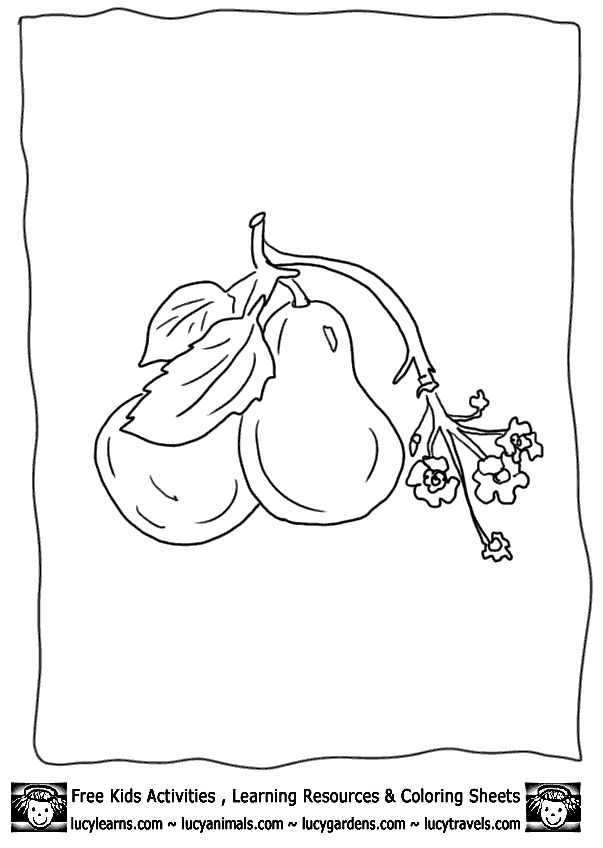 Free printable fruit coloring pages pear at lucy learns for Food pyramid coloring page for preschoolers