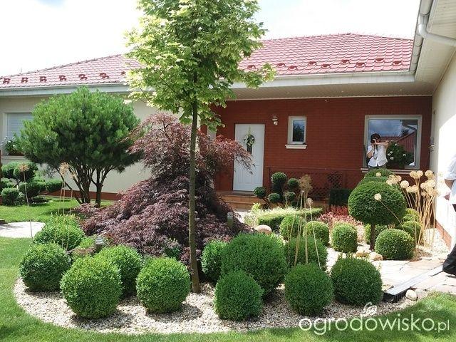 W moim małym ogródeczku - Dorota - strona 372 - Forum ogrodnicze - Ogrodowisko