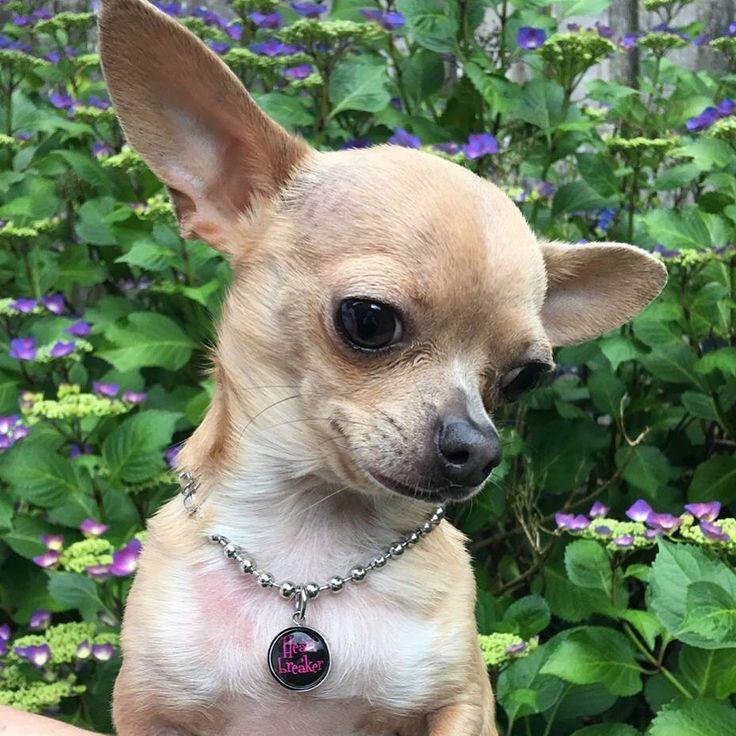 Heartbreaker necklace for dogs   www.furrytales.no
