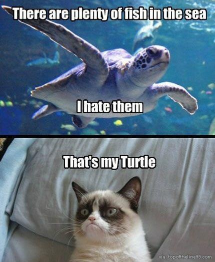 Best 25 grumpy kitty ideas on pinterest grumpy cat for Ok google plenty of fish