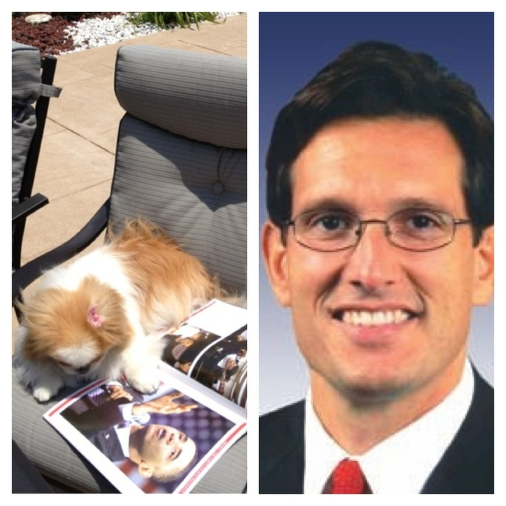 """@GOPLeader @EricCantor  Hey Eric:  This is your girl Fergi giving you a shout out!  Remember me...I'm the 7 year old Japanese Chin who during the 2012 Presidential Campaign my friends and I slammed YOU on Tumblr and Twitter!  I was just sitting here reminiscing about the 2008 INAUGURATION... Remember at this very moment in time 4 years ago,  YOU and the rest of YOUR BUFFOON MINIONS... met for dinner to plot and make sure PRESIDENT OBAMA was a """"ONE TERM PRESIDENT"""".  How did that workout for…"""