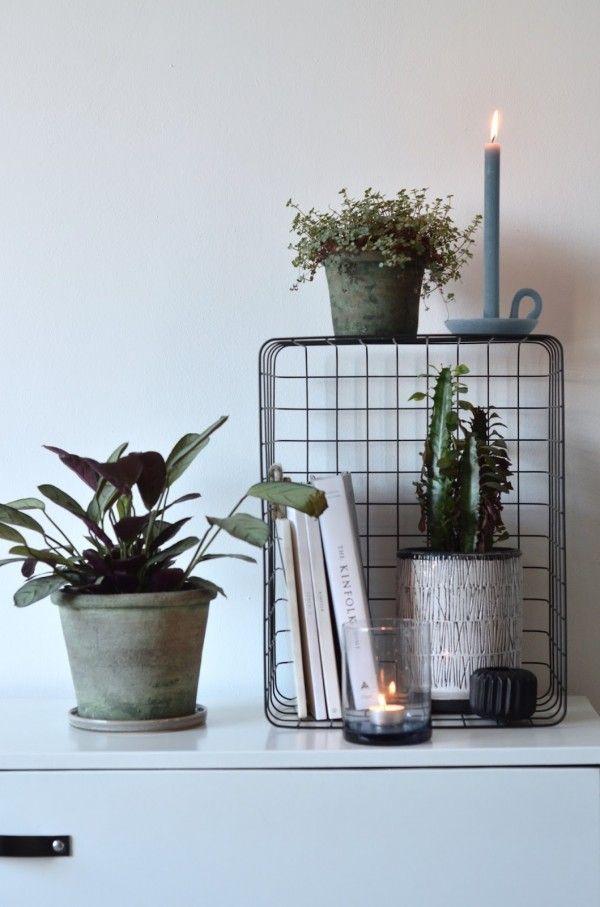 Mooi: Planten groeperen; combinatie draadmand met planten; kleurencombinatie groen met blauw; kaars van Ontwerpduo [styling en fotografie door @milou_nieuwenhuis].
