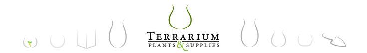 Terrarium Plants & Supplies