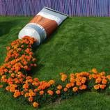 Marigold Paint Tube Installation: really great! I would like to have one in my garden :)