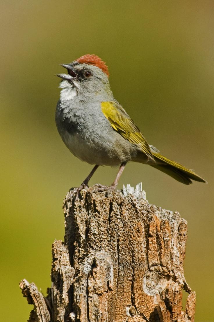 186 best birds 8 3 images on pinterest beautiful birds colorful
