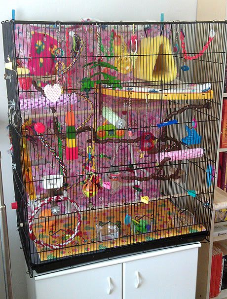 "Image result for ""lovebird"" cage"