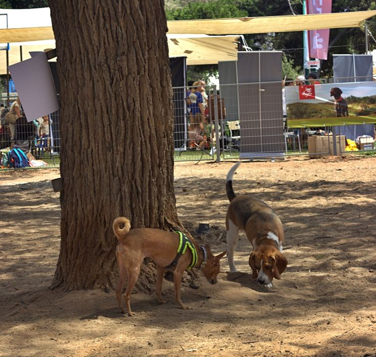 Dog park (during the Dog Festival in August.My Bambi was very happy to meet new friends